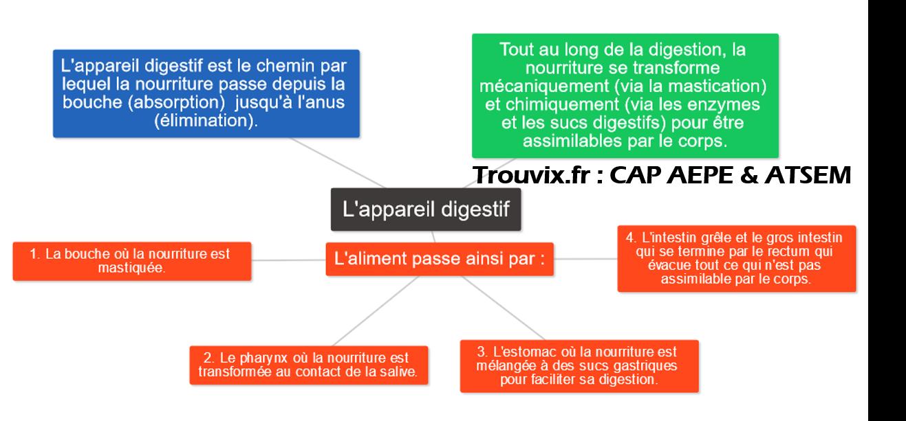 cap-aepe-atsem-appareil-digestif